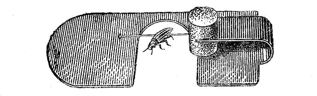 десятикратная препаровальная лупа рис. 4